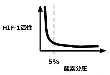 酸素分圧-活性.jpg
