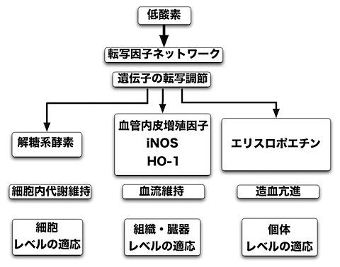 低酸素ネットワーク.jpg